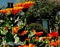 Lule ne Permet - panoramio (1).jpg