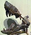 Lycosuchus.jpg