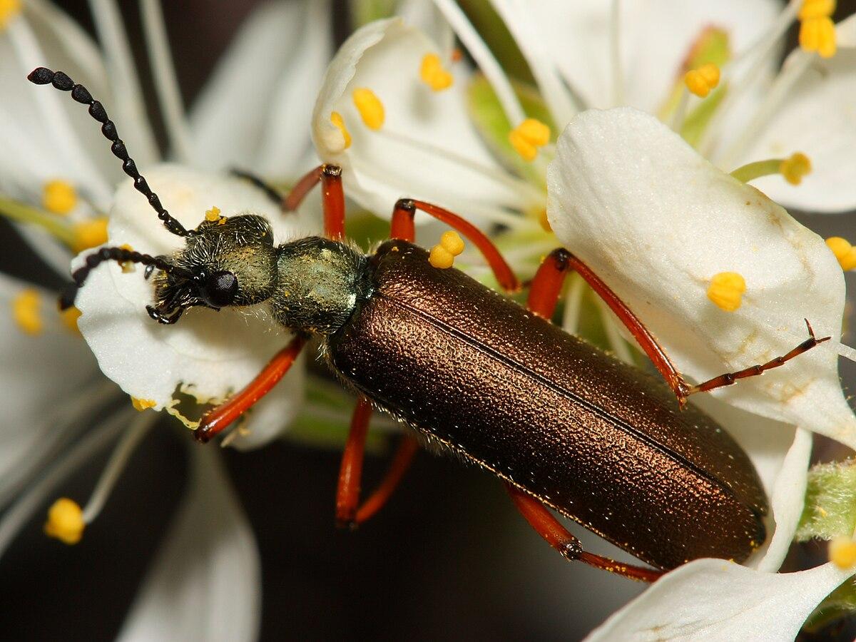 этого сухого фото насекомых ленинградской области значимые