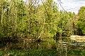 Münster, Wolbeck, Wolbecker Tiergarten, Naturwaldzelle -Teppes Viertel- -- 2014 -- 7083.jpg