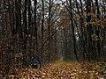 M3, Moldova - panoramio (14).jpg