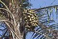 Macaúba (2) - 23 03 15S - 49 01 33W REFON.jpg