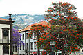 Madeira-01-0004 (7337308766).jpg