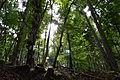 Magischer Wald.JPG