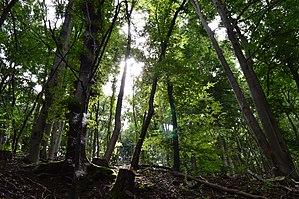 Münstereifel Forest - Image: Magischer Wald