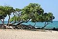 Mahai'ula Bay Beach, Kailua-Kona (504651) (23845316460).jpg