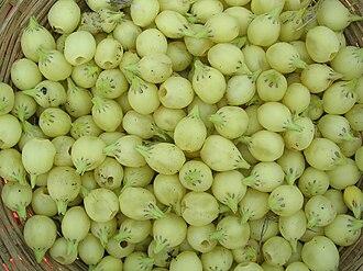 Madhuca longifolia - Mahua flowers