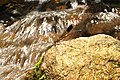 Malabar torrent dart Euphaea fraseri Male from Anaimalai hills DSC 2872.jpg