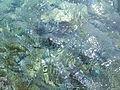 Malindi Marine National Park 03.jpg