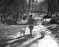 Man Running with Dogs.jpg