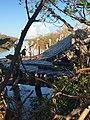 Mangled dock (37068879652).jpg