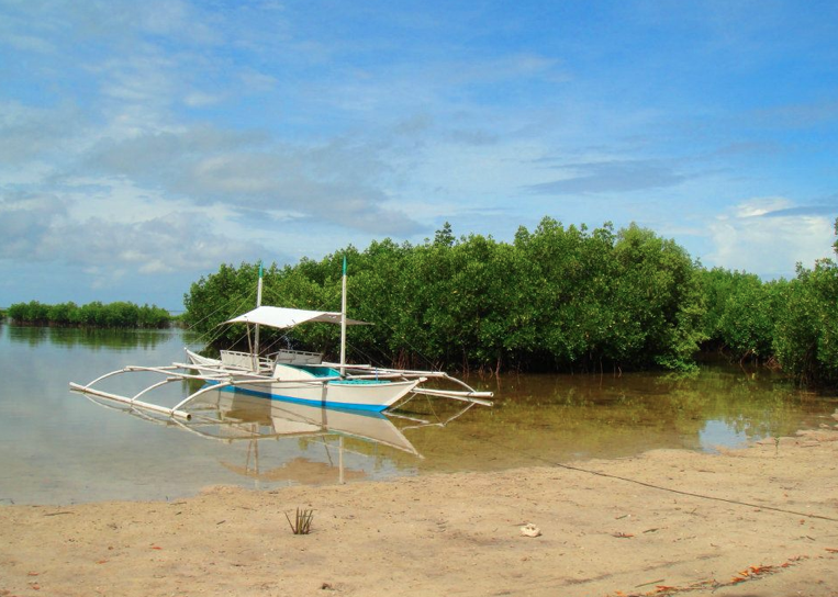 Mangroves of Bohol