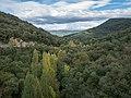 Maroño - Bosque 01.jpg