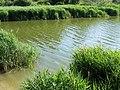 Marsworth Reservoir - geograph.org.uk - 1401063.jpg