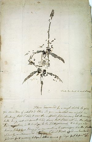 Autograph letter concerning the discovery of p...