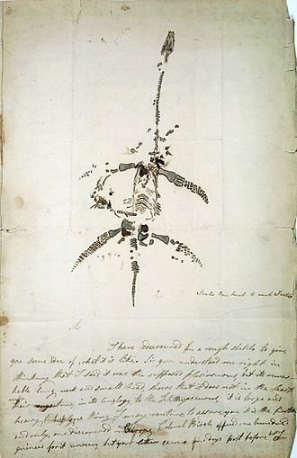 Plesiosauroidea - Autograph letter concerning the discovery of Plesiosaurus, from Mary Anning.