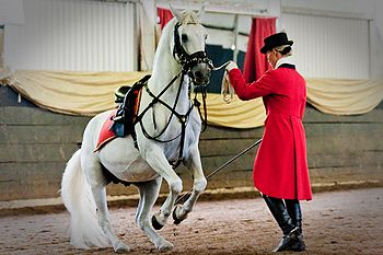Matters Equestrian.jpg