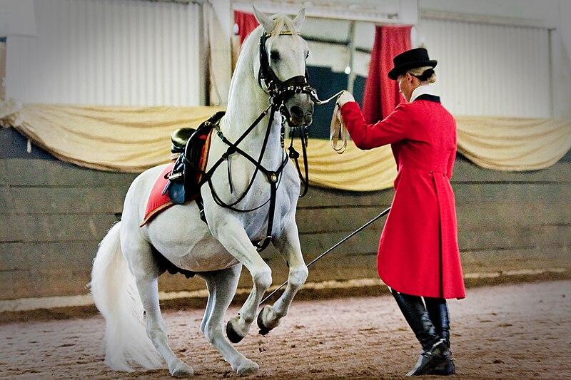 File:Matters Equestrian.jpg