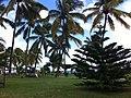 Mauritius 酒店海边 - panoramio.jpg