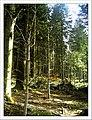 May Hochschwarzwald Mount Kandel 1300 mtr wilderness - Master Mythos Black Forest Photography 2013 former bear land - panoramio (4).jpg