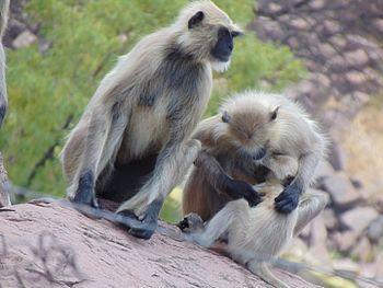 Monkey family pic.jpg
