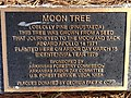 MoonTreePlaque.jpg