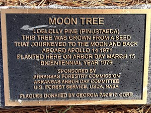 Moon tree - Plaque at the base of the Fort Smith, Arkansas, Moon Tree.