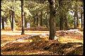 Moores Creek National Battlefield MOCR0948.jpg
