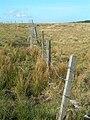 Moorland Fence - geograph.org.uk - 791383.jpg