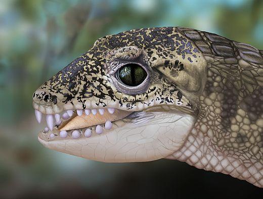 Morrinhosuchus