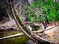 Moss on Tree (4529531614).jpg