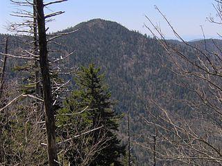 Mount Chapman mountain in Great Smoky Mountains, USA