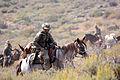 Mountain Warfare Training Center teaches advanced horsemanship 130905-M-EV518-2421.jpg