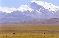 Mt Gurla Mandhata and wild Donkeys.jpg