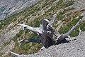 Mt St Helens Windy Ridge 2017 23.jpg