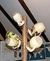 Muzej Poljoprivrede - stočarstvo (mlekarstvo) - glineni vrčevi.jpg