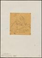 Myiobius ornatus - 1854 - Print - Iconographia Zoologica - Special Collections University of Amsterdam - UBA01 IZ16500333.tif