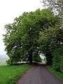 ND Zwei Linden vor dem Schwalbenhof in Berndorf (Eifel).jpg
