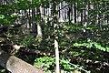 NPR Boubínský prales 20120910 12.jpg