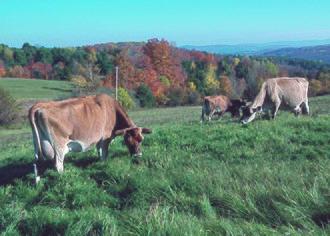 Upland pasture - Image: NRCSVT84001 Vermont (6683)(NRCS Photo Gallery)