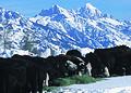 NRCSWY02019 - Wyoming (6903)(NRCS Photo Gallery).jpg
