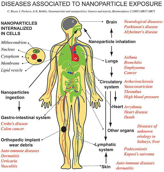 File:Nanotoxicology.jpg