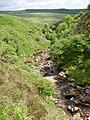 Nant-y-moch in limestone ravine - geograph.org.uk - 1354471.jpg