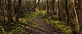Nationaal Park Weerribben-Wieden Pad tussen berken en moeras 03.jpg