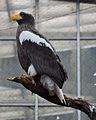 National Aviary (13020183313).jpg