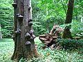 Nationalpark Hainich 001.jpg