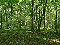 Nationalpark Hainich craulaer Kreuz 2020-06-03 14.jpg