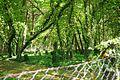Nationalpark Müritz - alter Friedhof Krienke (3).jpg