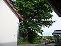 Naturdenkmal OS 00136 Eiche Neuenkirchen Melle Datei 9.jpg