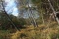 Nature reserve Dobrockovske hadce in autumn 2011 (31).JPG